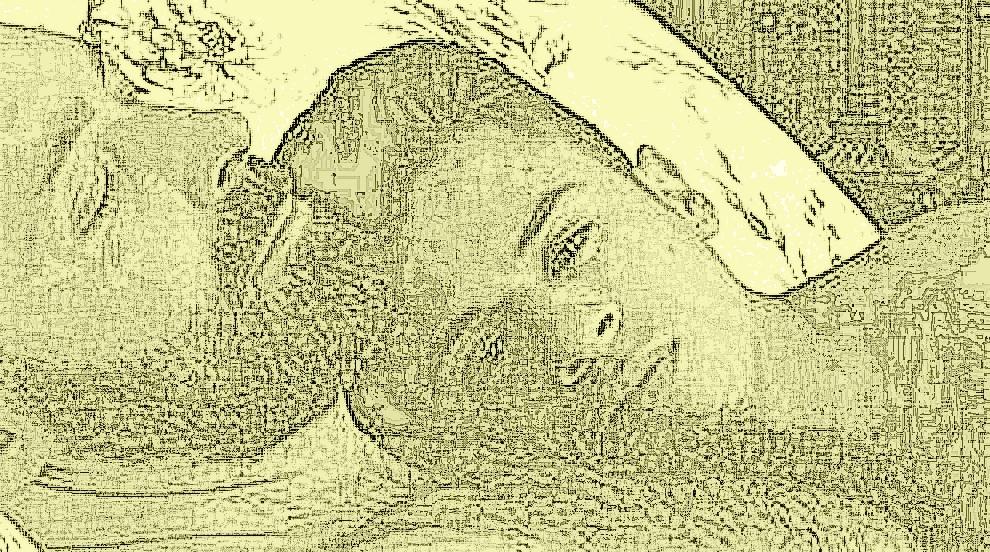 hijo-protegido-330x184.jpg