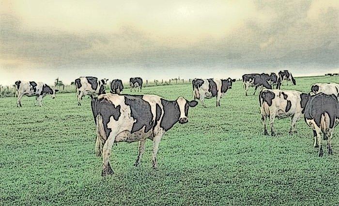 rebano-de-vacas-aplasta-a-anci-jpg_700x0